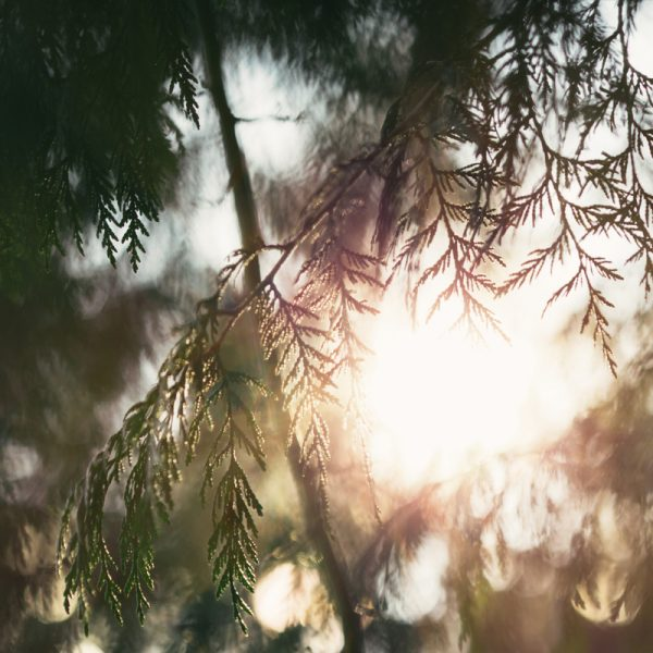 forets3
