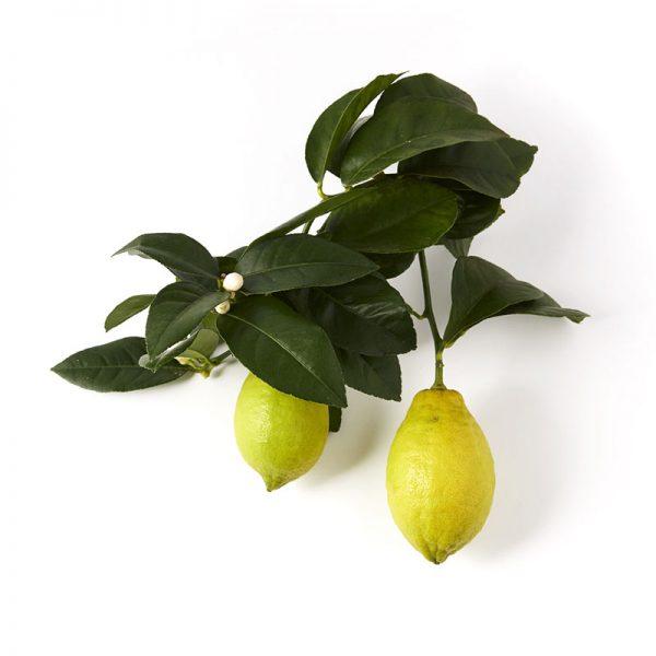 Jardin Citrus 03